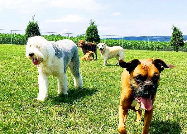 dog at puppy boarding in manheim pa