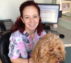 pet stylist in manheim, pa