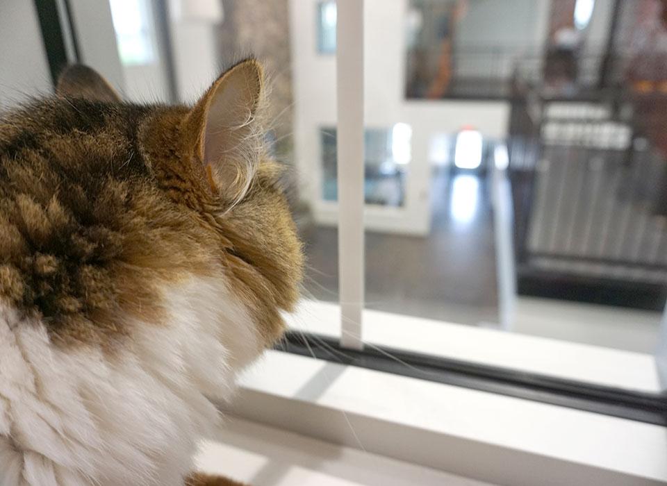 Cat Boarding | Manheim, PA | Lancaster County | Canine