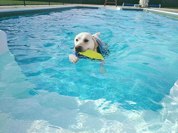 Swim_image01_600x450